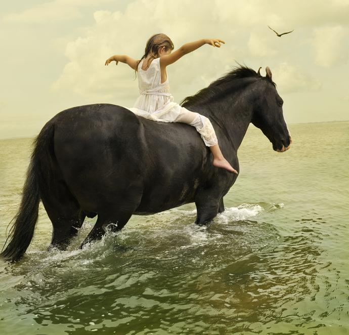 Marwari Stallion-1   Tom Chambers