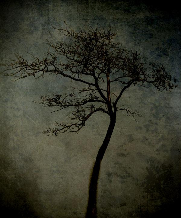 A Hidden World Below | Mixed Media Photography, Wax on Wood Panel | Yuko Ishii