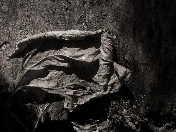 Feuille sur souche | Daniel Heikalo | Montreal, Quebec | 2012