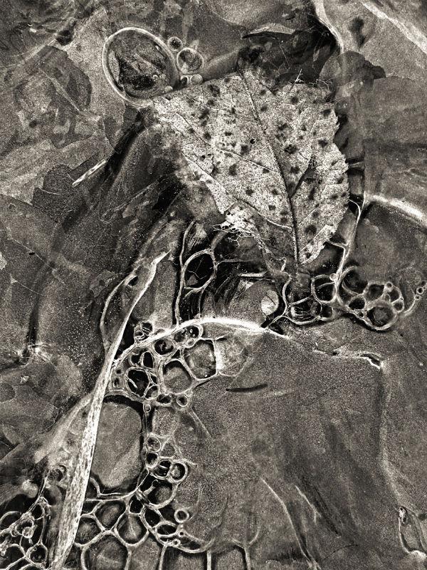 Ice and leaf 2 Daniel Heikalo 600