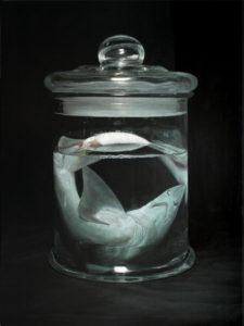 Shark | Miguel Angel Moya